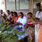 Moringa Life Project